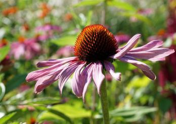 Cette image représente une fleur
