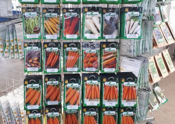 Das Bild zeigt Gemüsesaatgut