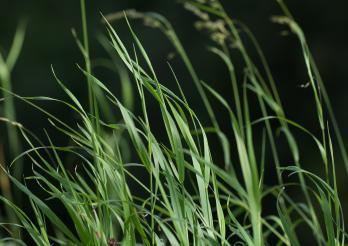 Zecken findet man im Unterholz oder in ländliche Gebiete, aber auch in städtischen Grünräumen.
