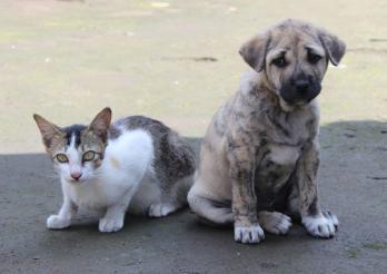 das Foto zeigt einen kleinen Hund und eine Katze
