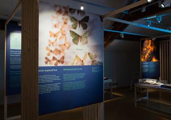 Exposition Papillons de nuit - #2 Biodiversité Fribourg
