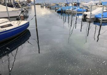 Pollution dans le port de Portalban – appel à témoin
