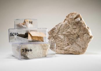 Grammatit und verschiedene Objekte aus der Sammlung Fontaine