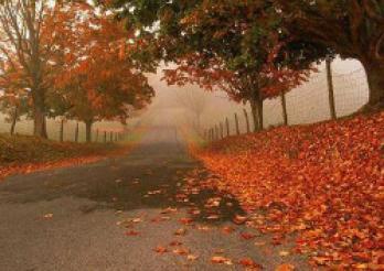 Allée d'arbres en automne