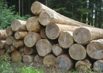 L'exploitation des forêts