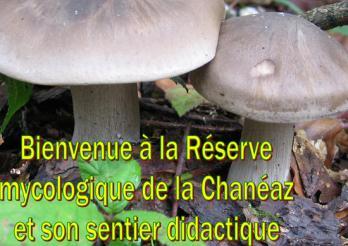 Bienvenue à la Réserve mycologique de la Chanéaz