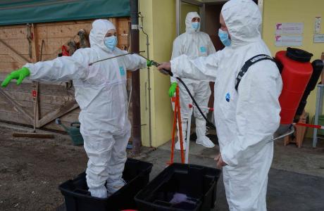 Première désinfection après contact avec les animaux infectés