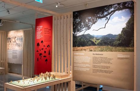 Exposition Chat sauvage - #3 Biodiversité Fribourg (vue d'ensemble)