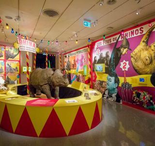 Rhinostar Ausstellung