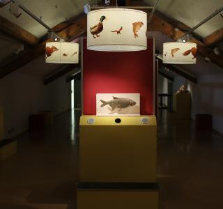 Küken 2018 - Ausstellung