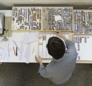 Collections entomologiques