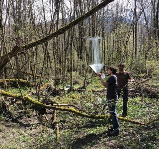 Projekt Holzkäfer des Kantons Freiburg