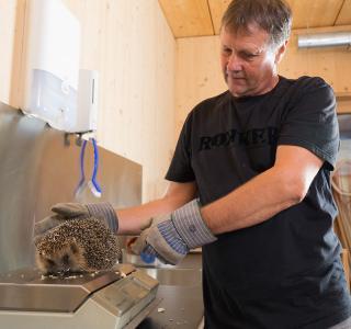 Gardien d'animaux du MHNF avec un hérisson