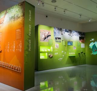 Wolf - Ausstellung