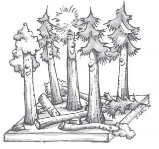 Waldbau: Eine erste Auswahl