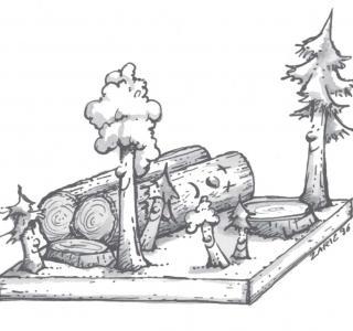 Waldbau: die Nachfolge regeln