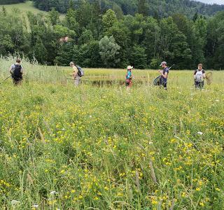 Suche nach Exuvien im Rahmen dem Projekt über die Libellenvielfalt im Kanton