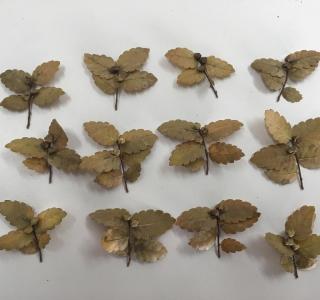 Dispersal units Zelkova abelicea