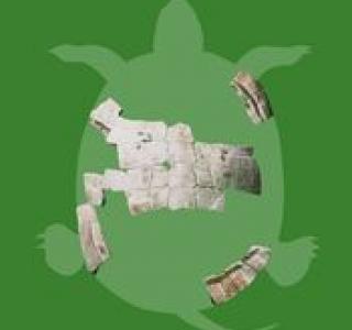 Carapace de tortue, Vallon