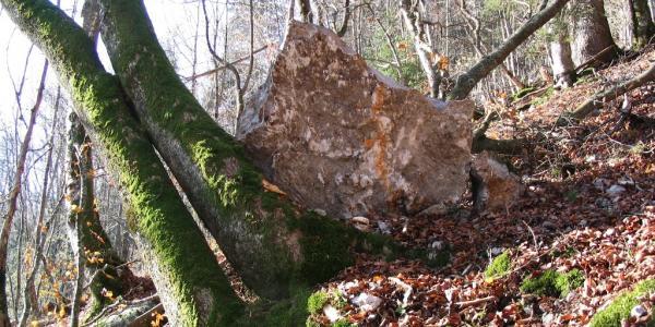 Schutzwald gegen Blockschlag