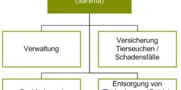 Organigramm Sanima