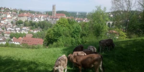 Das Bild zeigt die Stadt Freiburg