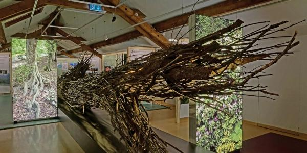 De mémoire d'arbre - exposition