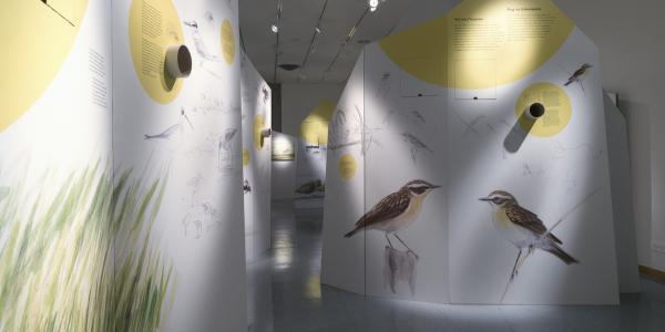 Oiseaux migrateurs - exposition