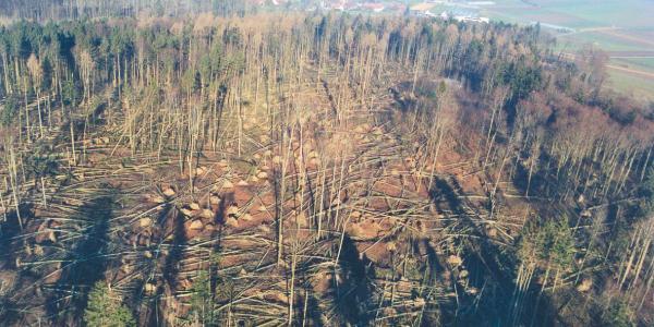 Von Lothar verwüsteter Wald