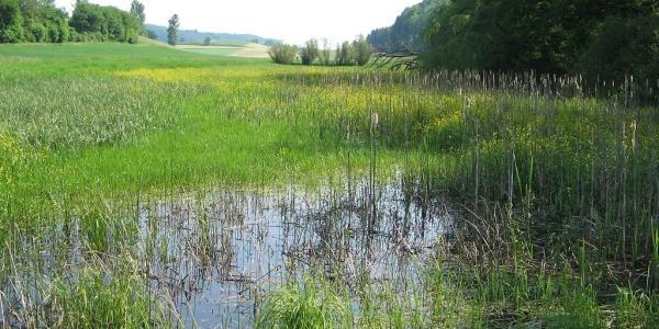 Biotope à rainette verte à Léchelles