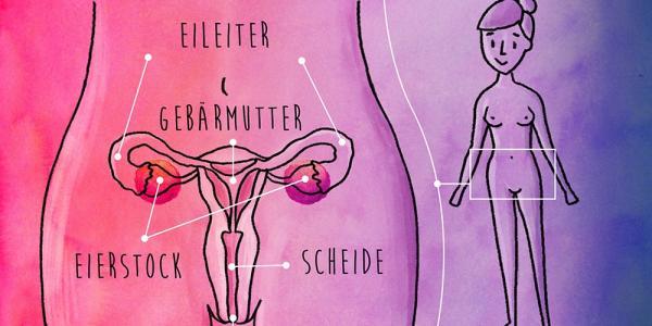 innere Geschlechtsorgane