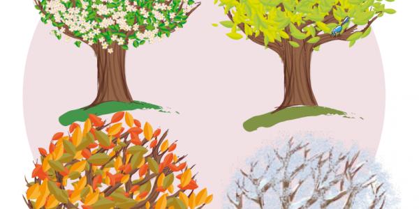 4 saisons de l'arbre - le jeu des défis