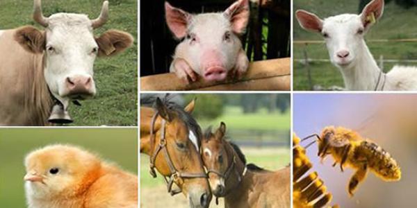 Sanima Etablissement d'assurance des animaux de rente