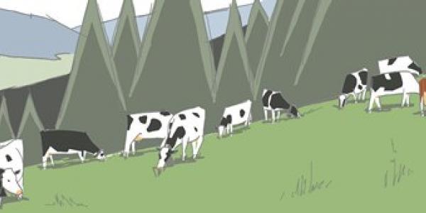 dessin d'un troupeau à l'alpage - Zeichnung einer Herde auf der Alp