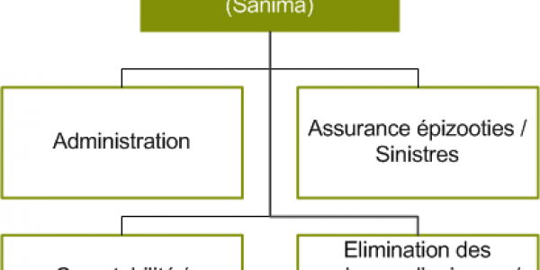 Organigramme Sanima