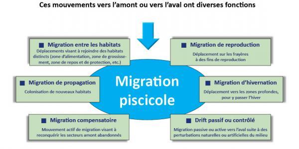 Schéma représentant les diverses fonctions de la migration piscicole