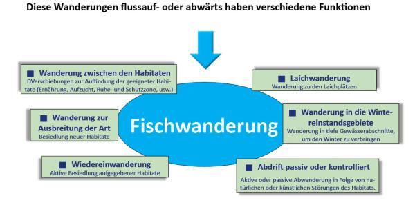 Diagramm, das die verschiedenen Funktionen der Fischwanderung darstellt.