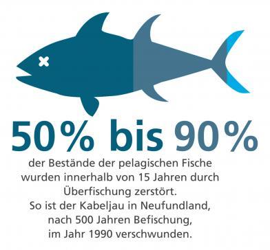 Um meinen ökologischen Fussabdruck zu verringern, kaufe ich Fische aus der Region, aus nachhaltiger Zucht (ASC), aus nachhaltiger Fischerei (MSC) oder Bio