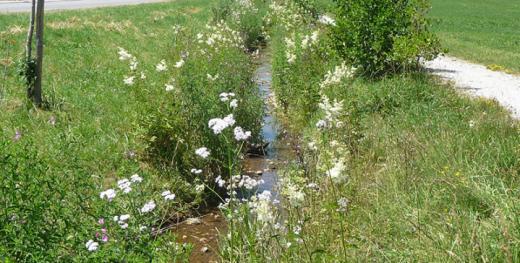Revitalisation des cours d'eau
