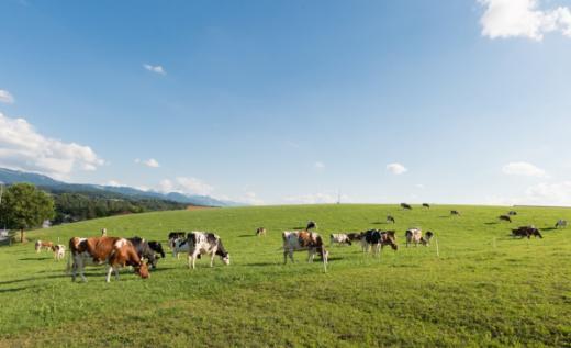 Aux agriculteurs et détenteurs d'animaux : le recensement agricole est ouvert !