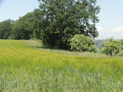 Agrarpraktiker-in | EBA