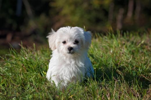 Ouvrez l'oeil avant d'acheter un chien !