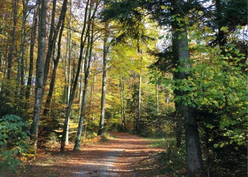 Révision de la loi sur les forêts et la protection contre les catastrophes naturelles : le Conseil d'Etat transmet le projet au Grand Conseil