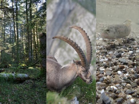 WNA - Sektor Fauna, Biodiversität, Jagd und Fischerei