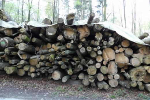 Les piles de bois-énergie : un placement régional sûr et écoresponsable
