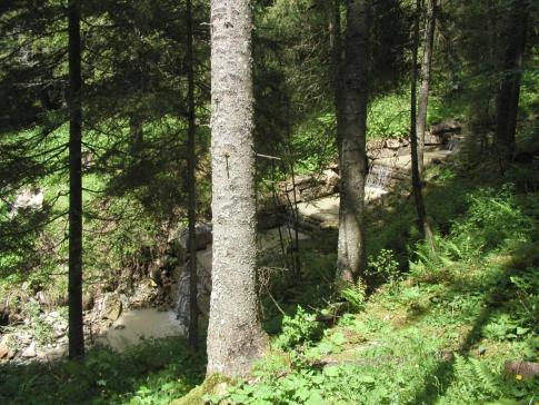 Forêt domaniale du Galm en BDMO