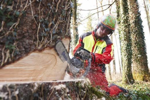 Forstpraktiker-in | EBA
