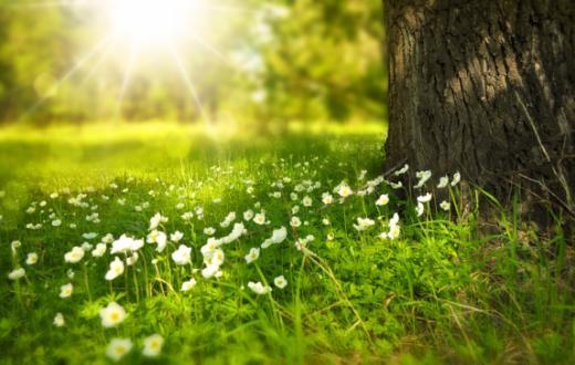 Mesures environnementales prises par l'agriculture