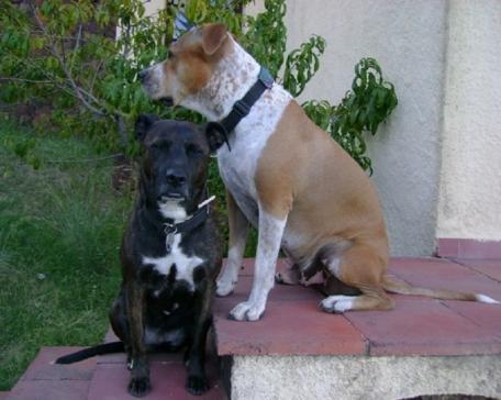 Bewilligungspflichtige Hunde