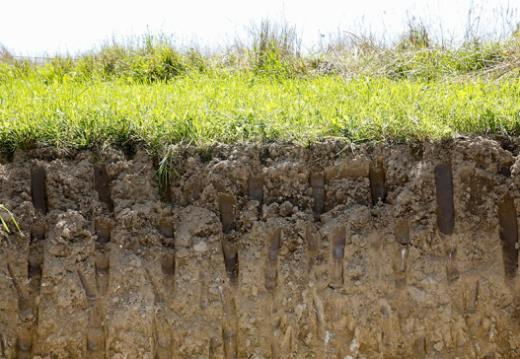 Analyses de sols en ville de Fribourg : la concentration en métaux lourds est problématique sur certaines parcelles